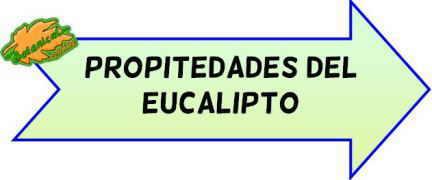 propiedades medicinales eucalipto