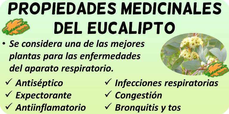 propiedades medicinales eucalipto y beneficios