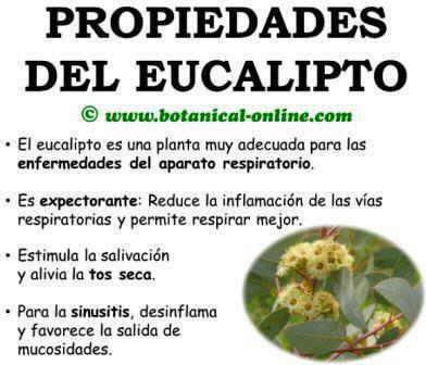 Te de eucalipto contraindicaciones