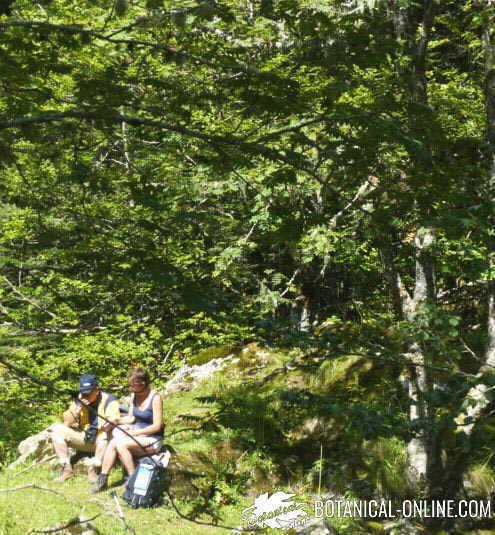 excursion picnic naturaleza