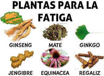 plantas medicinales para la fatiga o cansancio