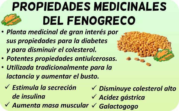 fenogreco propiedades medicinales