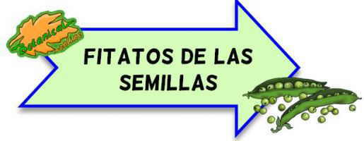 fitatos de las semillas