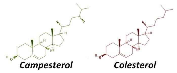 formula quimica fitoesterol campesterol y colesterol