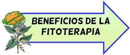 beneficios y ventajas de la fitoterapia