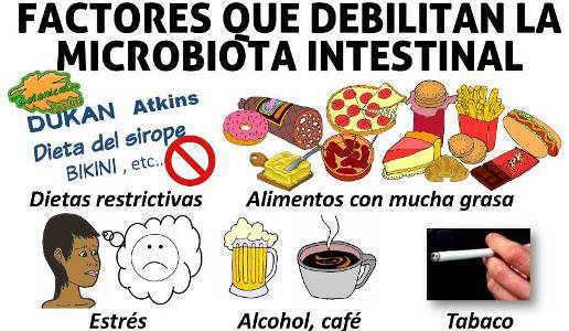 malos alimentos perjudiciales para la microbiota flora intestinal, disbiosis probioticos, prebioticos