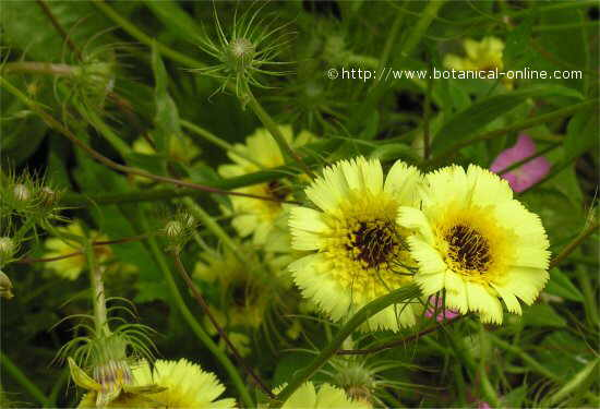 Flor concurso noviembre de 2007