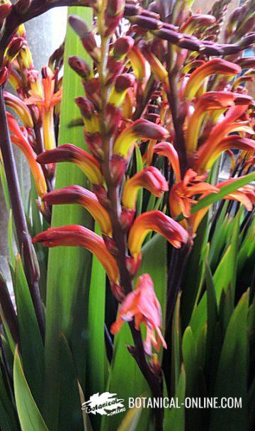 flor consurso de febrero 2017