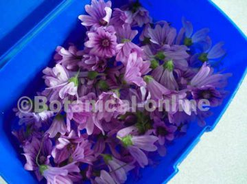 Flores de malva