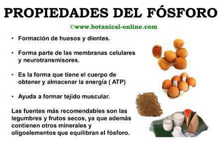plantas medicinales y aromaticas para niños