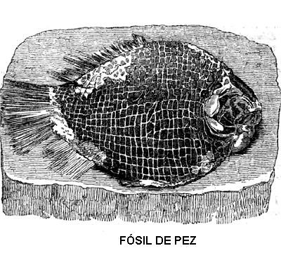 Fósil de pez
