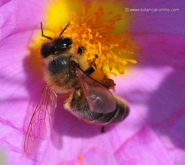 Foto de abeja
