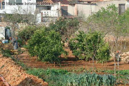 Como cultivar verduras y hortalizas en el jard n - Como hacer un huerto en el jardin ...