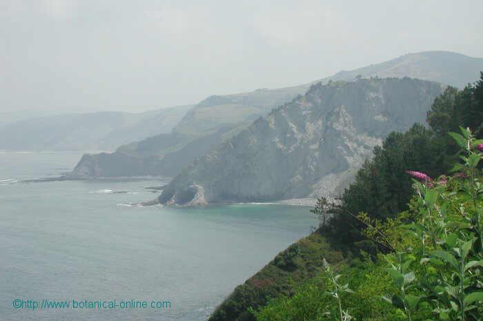 foto de costa