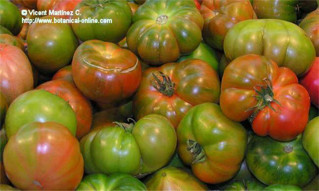 Foto de tomates
