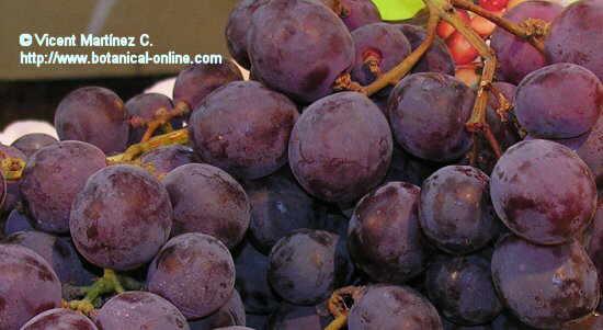 Foto de uvas