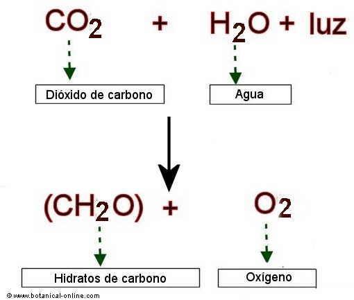 Funcion del dixido de carbono en la fotosintesis 72