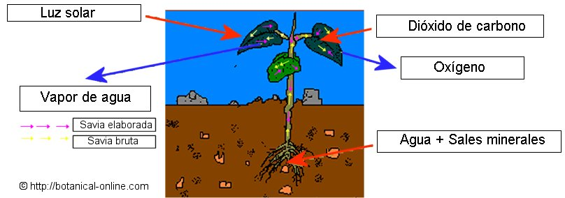Funcion del dixido de carbono en la fotosintesis 73