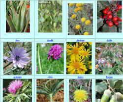 fotos plantas