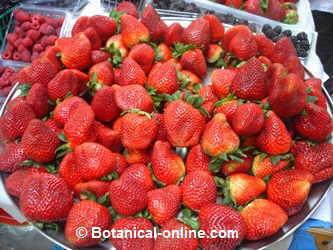 fresones y fresas en un mercado
