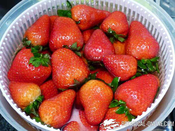 lavar fresas plaguicidas