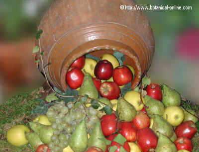 Jarro de frutas