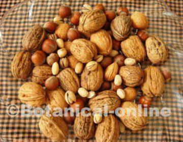frutos secos nueces pistachos avellanas almendras