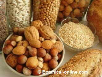 Fibra insoluble - Alimentos prohibidos con hemorroides ...