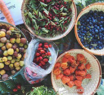 frutos silvestres comestibles otoño
