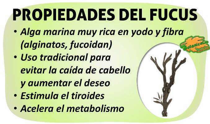propiedades curativas del alga fucus o laminaria y sus beneficios