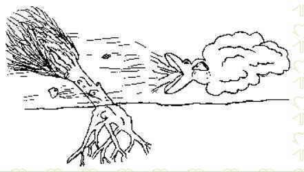 funciones de las raíces