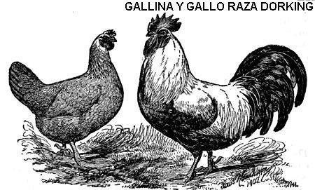 Utilidad De La Gallina Botanical Online