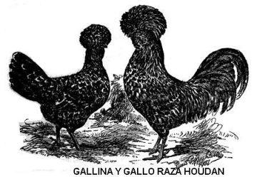 gallina Houdin