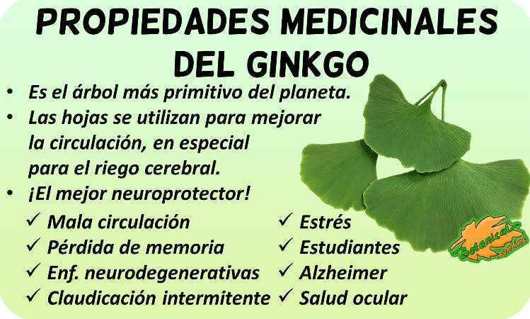 propiedades medicinales del ginkgo beneficios