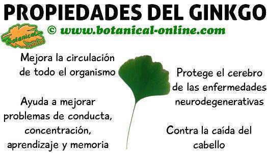 propiedades y beneficios del ginkgo, planta medicinal