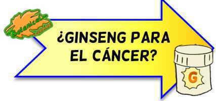 ginseng para el cáncer