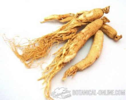 ginseng seco