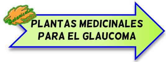 plantas glaucoma