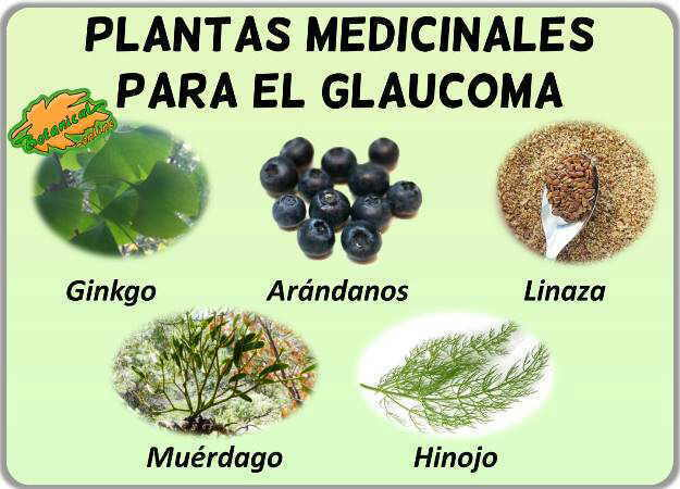 plantas medicinales glaucoma fitoterapia