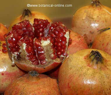 Photo of pomegranate grain