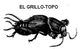 grilltpp
