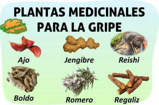 Remedios para la gripe for Tipos de hierbas medicinales