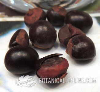 Guarana con cafeina