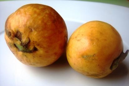 guayaba guava