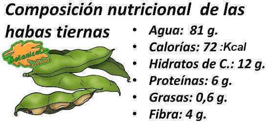 composicion nutricional de las habas tiernas