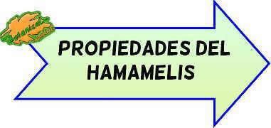 propiedades del hamamelis