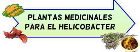 plantas medicinales helicobacter