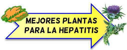 mejores plantas medicinales para la hepatitis