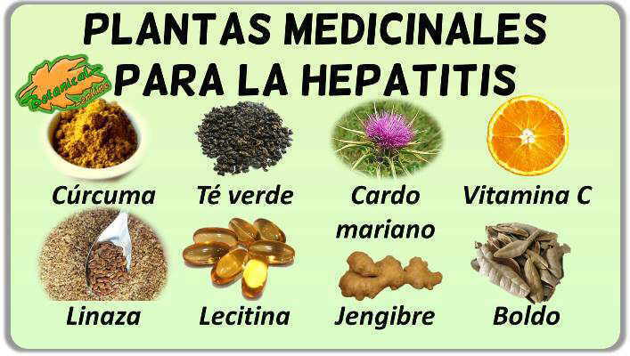 plantas remedios tratamiento natural hepatitis