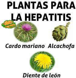 plantas tratamiento natural de la hepatitis